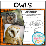 Owls...Informational Text and Literature and Craft