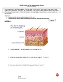 Group Actvity lesson on The Integumentary System