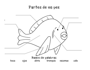 Partes de un pez/Parts of a fish