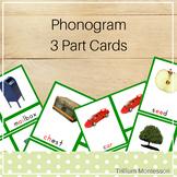 Phonogram 3-Part Cards