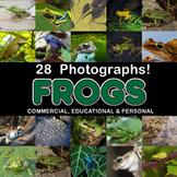 Photos Photographs FROGS Clip Art