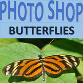 Photographs: Butterflies