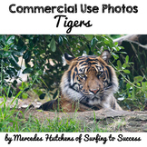 Photographs: Tigers
