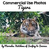 Photographs: Tigers