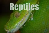 Photos : Reptiles - lizards - snakes - alligators - turtles -