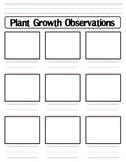 Plant Growth Observation Worksheet