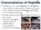 Reptiles and Birds PowerPoint Presentation Lesson Plan