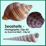 Seashells - Photographic Clip Art