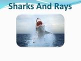 Sharks Rays - Marine Life Vol. 6 - Slideshow Powerpoint Pr