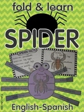 Spiders facts Fold and Learn
