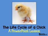 The Life Cycle of a Chick-A PowerPoint Lesson