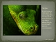 Venomous Snake Identification