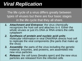 Viral Replication Power Point Presentation