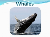 Whales - Marine Life Vol. 7 - Slideshow Powerpoint Presentation
