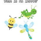 What Is An Insect? Book on insect characteristics