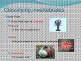 invertebrates presentation