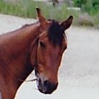 Education Horse Sense